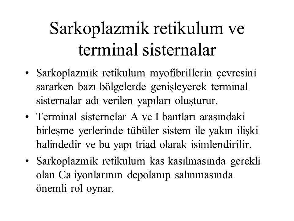 Sarkoplazmik retikulum ve terminal sisternalar