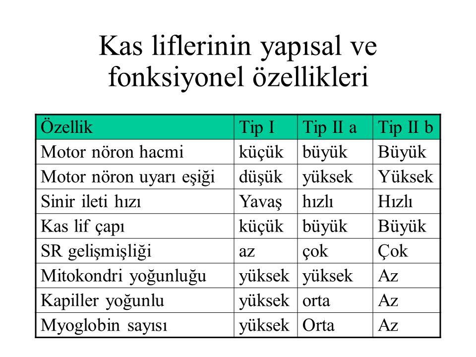 Kas liflerinin yapısal ve fonksiyonel özellikleri