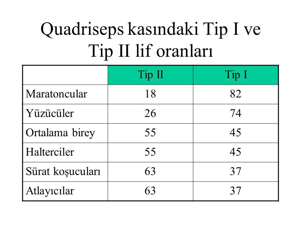 Quadriseps kasındaki Tip I ve Tip II lif oranları