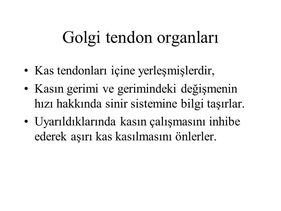 Golgi tendon organları