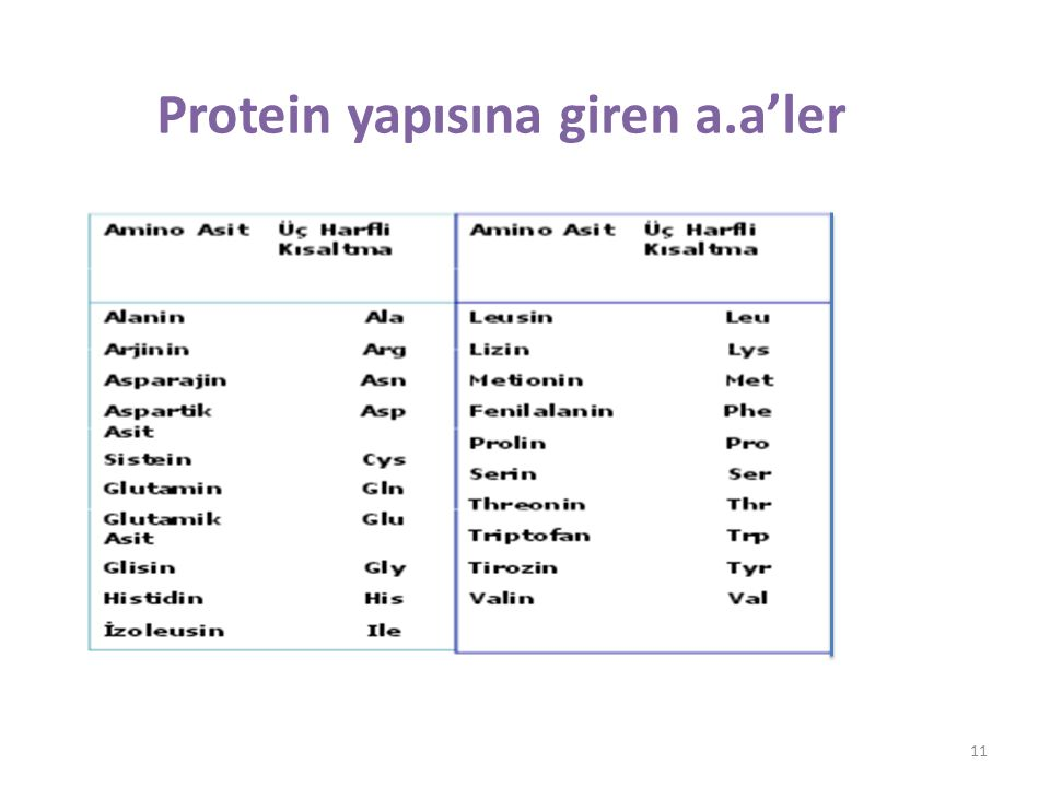 Protein yapısına giren a.a'ler