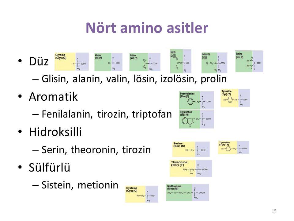 Nört amino asitler Düz Aromatik Hidroksilli Sülfürlü