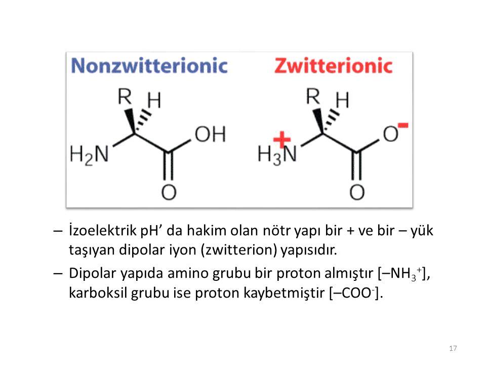 İzoelektrik pH' da hakim olan nötr yapı bir + ve bir – yük taşıyan dipolar iyon (zwitterion) yapısıdır.