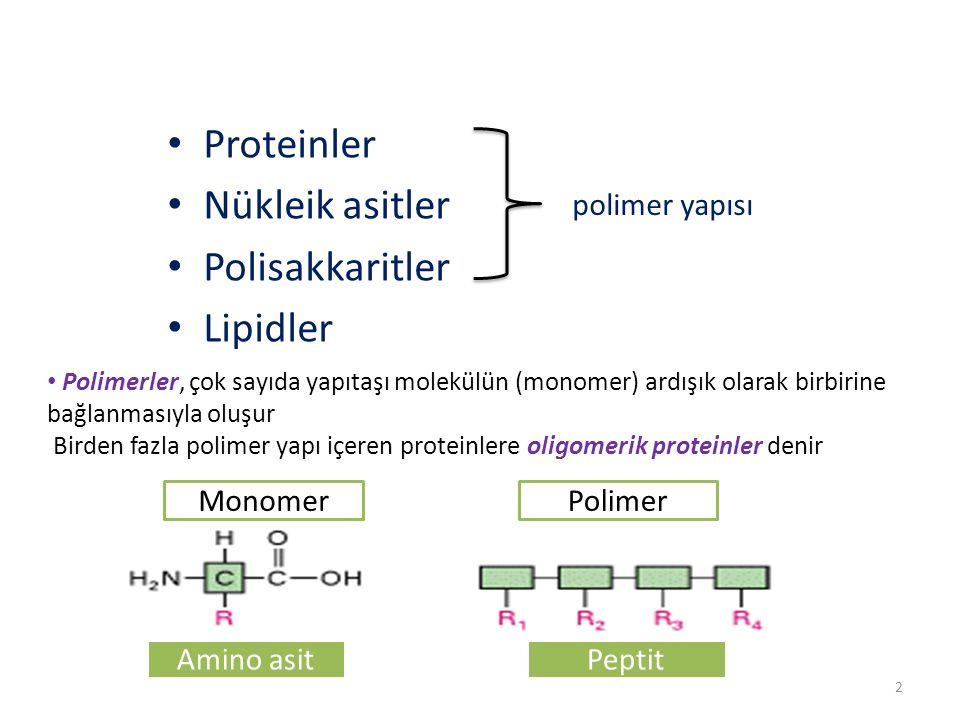 Proteinler Nükleik asitler Polisakkaritler Lipidler polimer yapısı