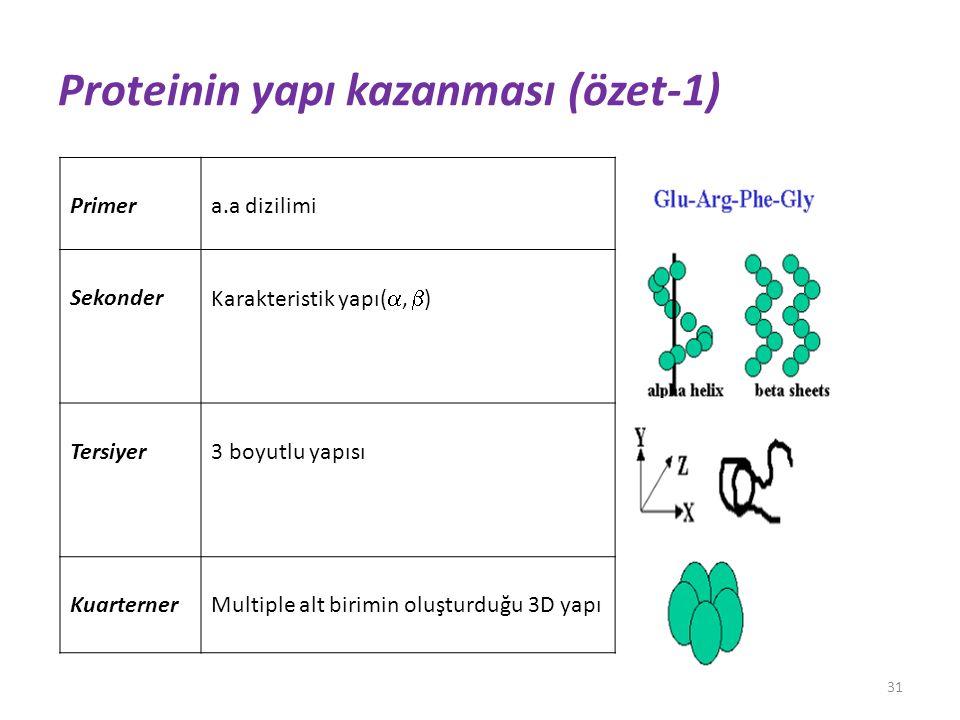 Proteinin yapı kazanması (özet-1)