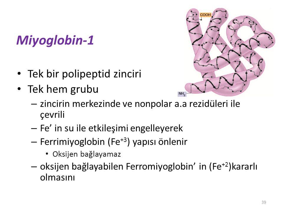 Miyoglobin-1 Tek bir polipeptid zinciri Tek hem grubu