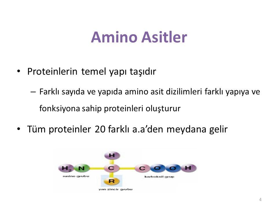 Amino Asitler Proteinlerin temel yapı taşıdır
