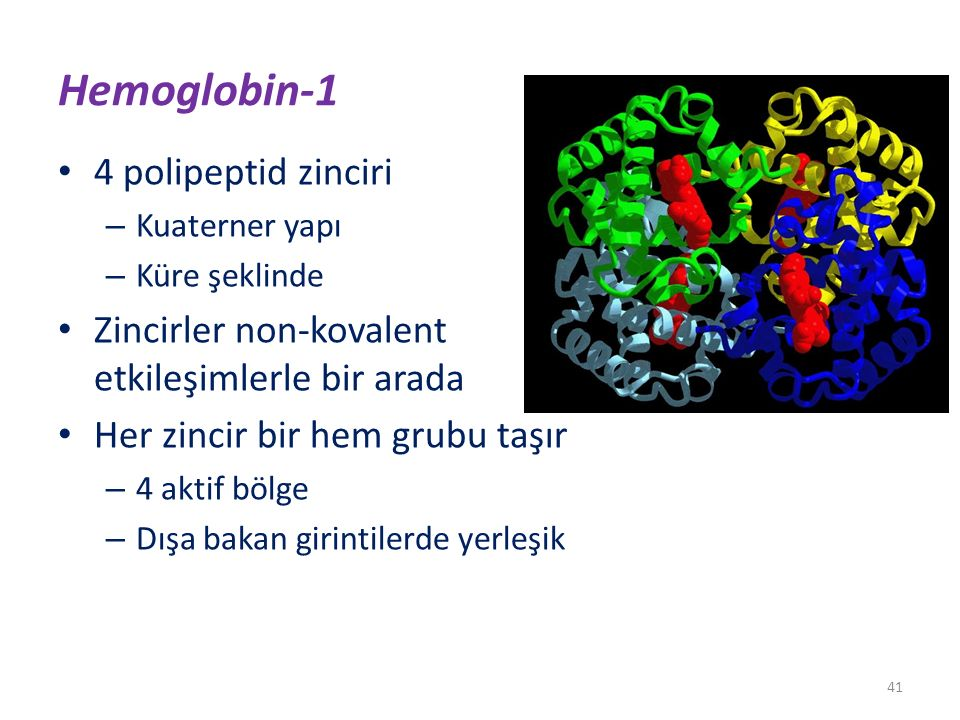 Hemoglobin-1 4 polipeptid zinciri
