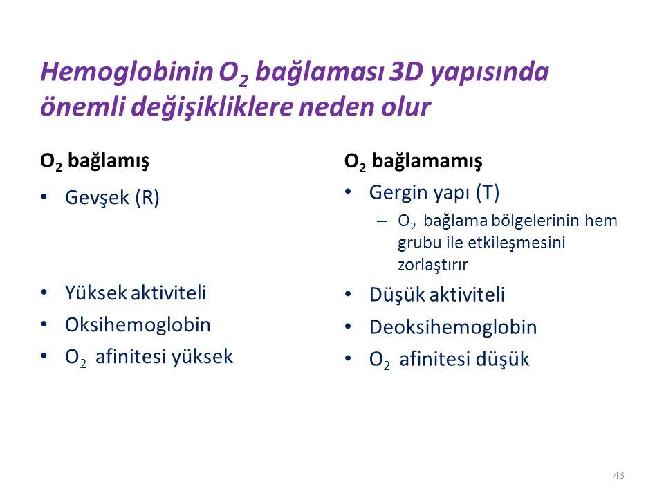 Hemoglobinin O2 bağlaması 3D yapısında önemli değişikliklere neden olur
