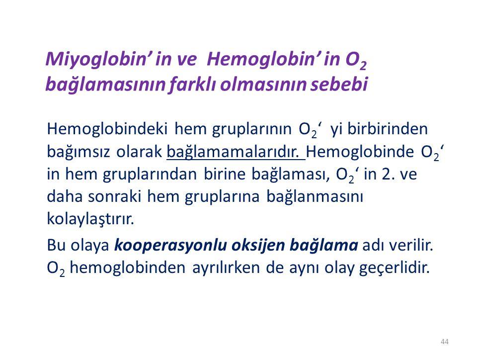 Miyoglobin' in ve Hemoglobin' in O2 bağlamasının farklı olmasının sebebi