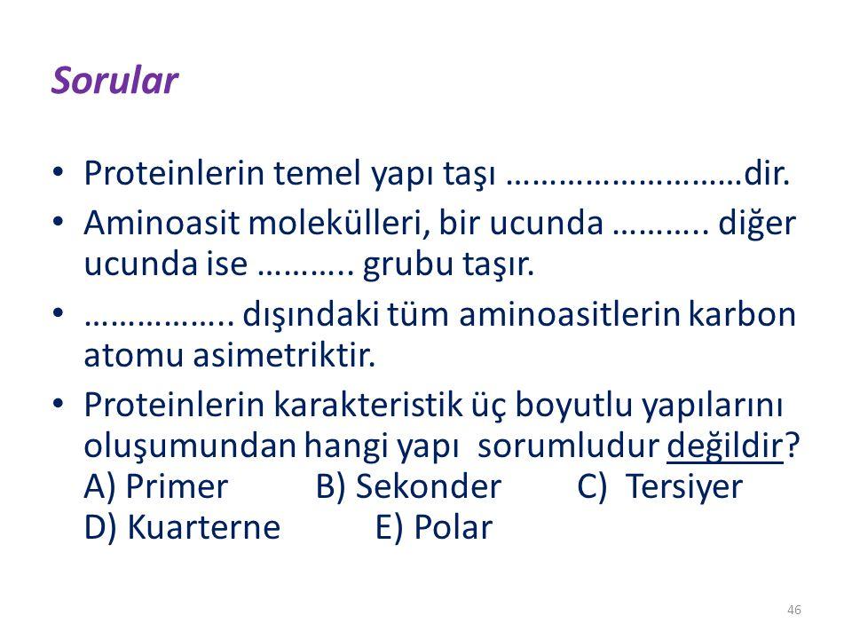 Sorular Proteinlerin temel yapı taşı ………………………dir.