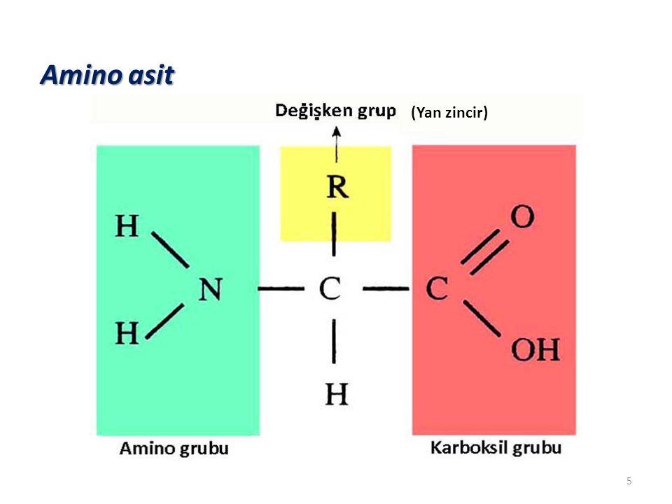 Amino asit (Yan zincir)