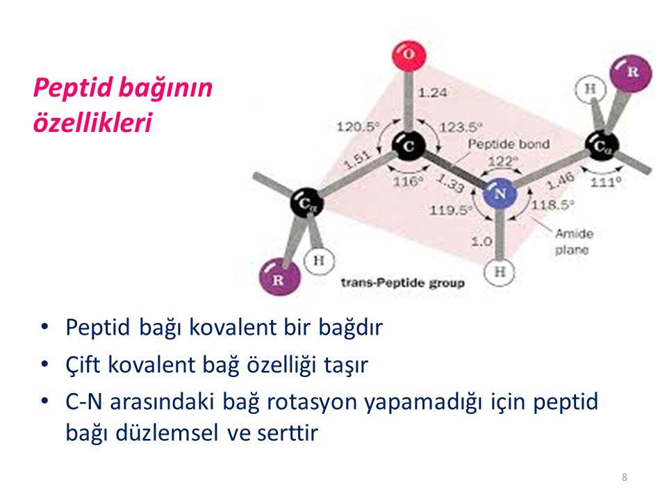 Peptid bağının özellikleri