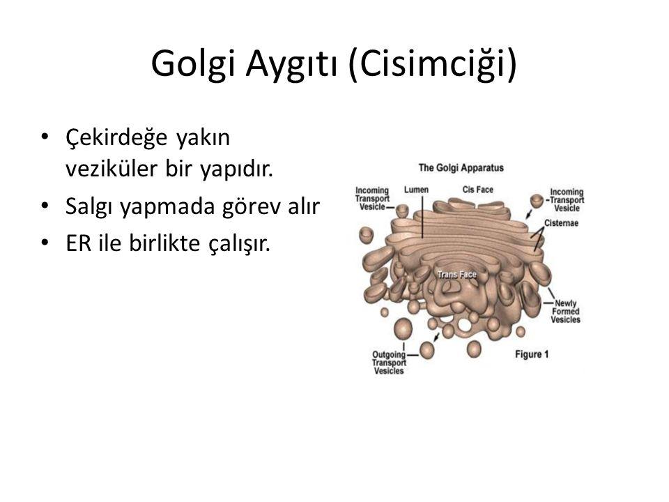 Golgi Aygıtı (Cisimciği)
