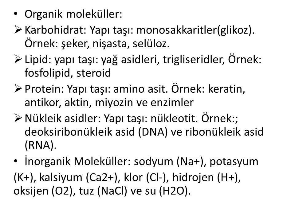 Organik moleküller: Karbohidrat: Yapı taşı: monosakkaritler(glikoz). Örnek: şeker, nişasta, selüloz.