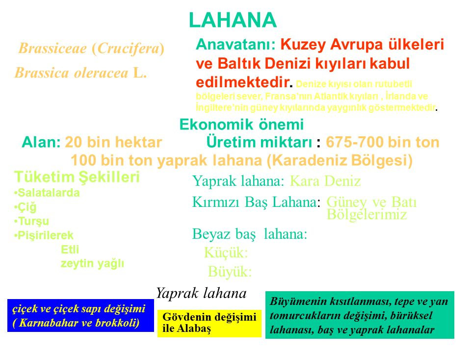 100 bin ton yaprak lahana (Karadeniz Bölgesi)
