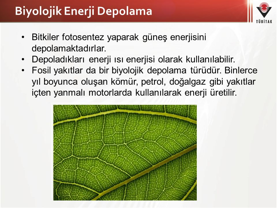 Biyolojik Enerji Depolama