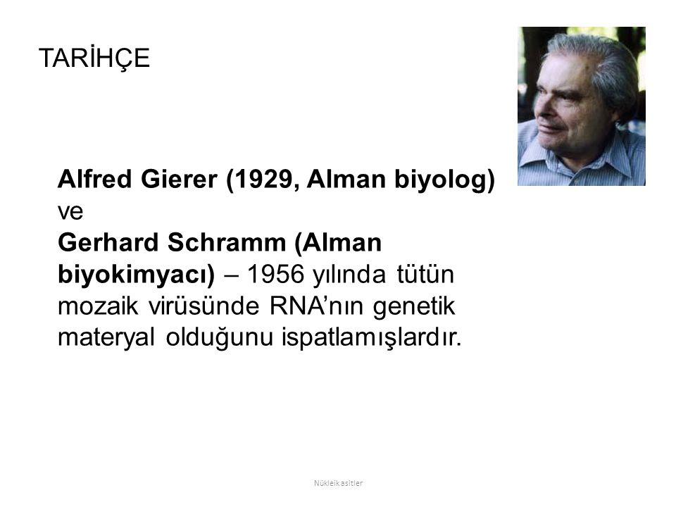 Alfred Gierer (1929, Alman biyolog) ve