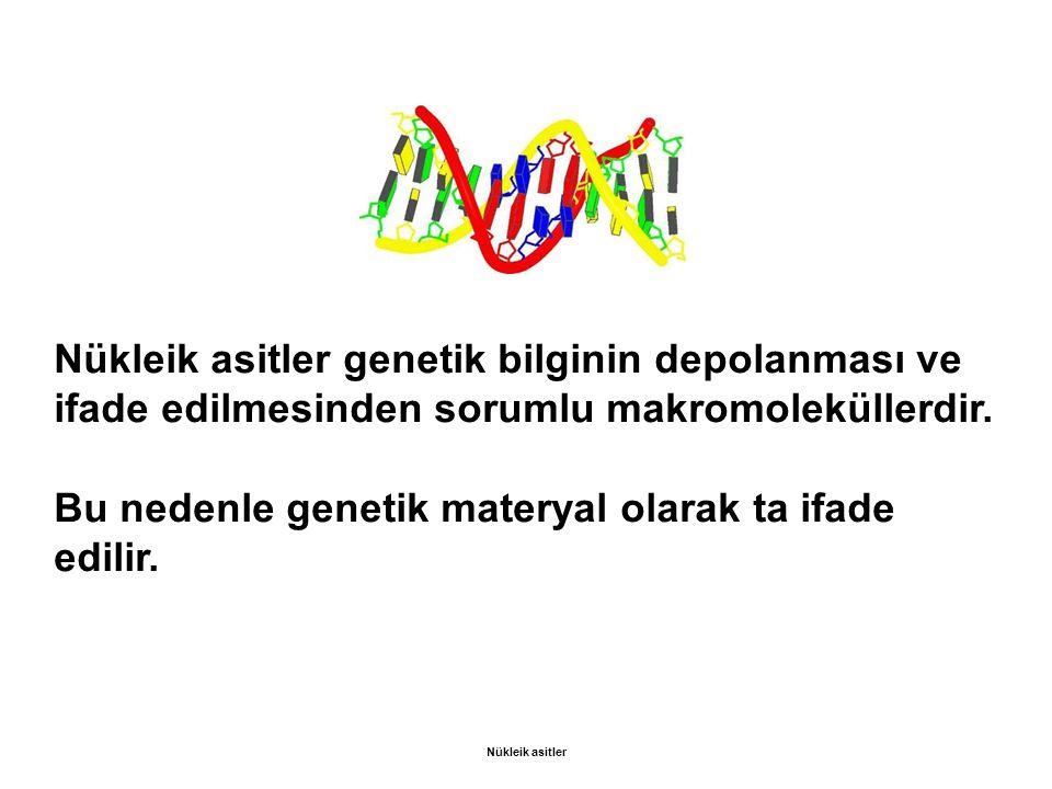 Bu nedenle genetik materyal olarak ta ifade edilir.