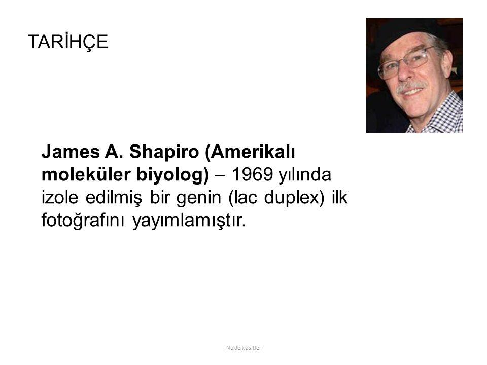 TARİHÇE James A. Shapiro (Amerikalı moleküler biyolog) – 1969 yılında izole edilmiş bir genin (lac duplex) ilk fotoğrafını yayımlamıştır.