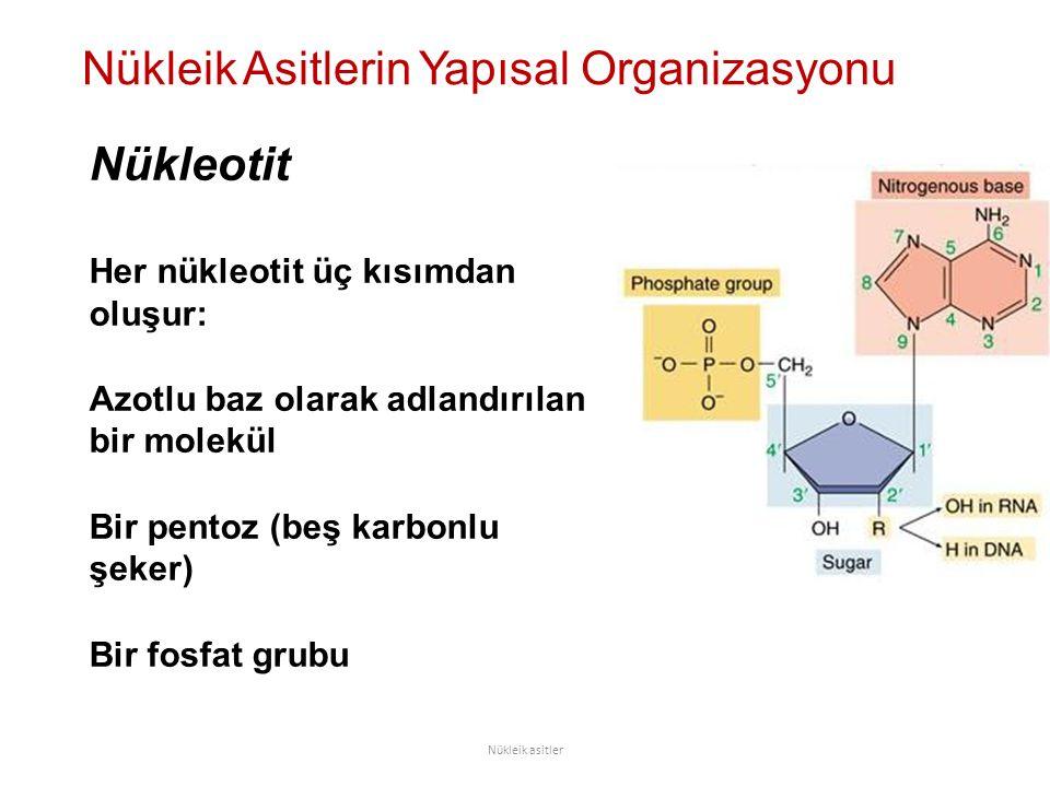 Nükleik Asitlerin Yapısal Organizasyonu