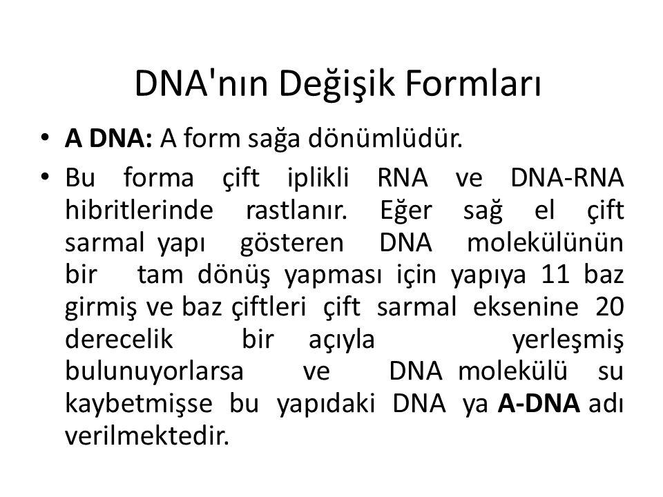 DNA nın Değişik Formları