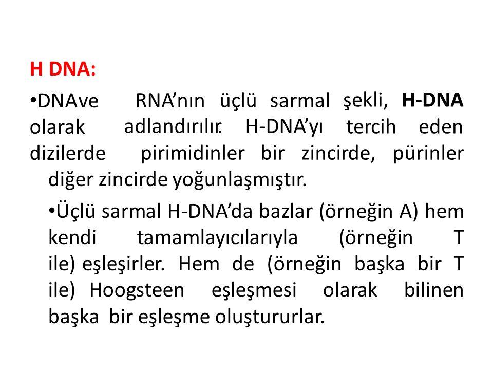 H DNA: DNA ve olarak dizilerde. RNA'nın üçlü. sarmal. şekli, H-DNA. tercih eden. adlandırılır. H-DNA'yı.