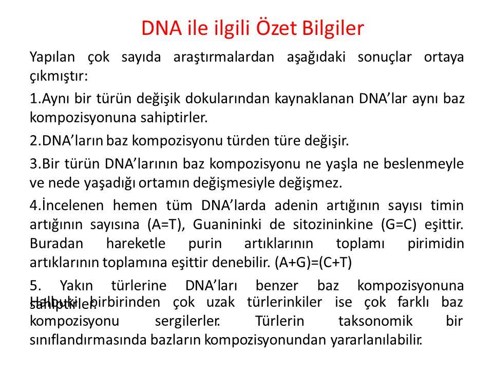 DNA ile ilgili Özet Bilgiler