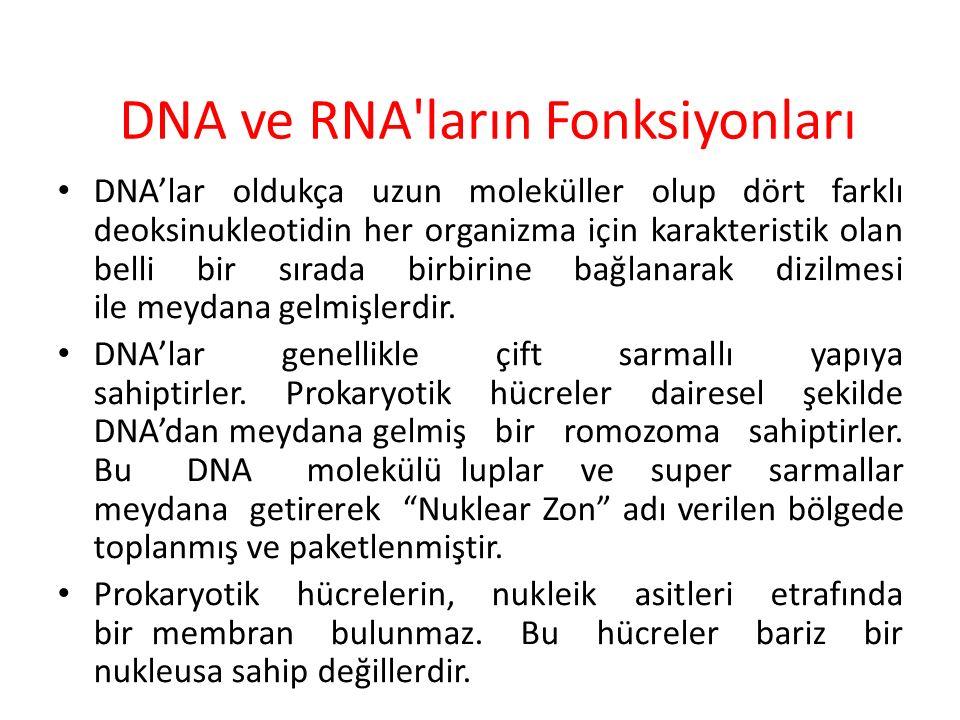 DNA ve RNA ların Fonksiyonları