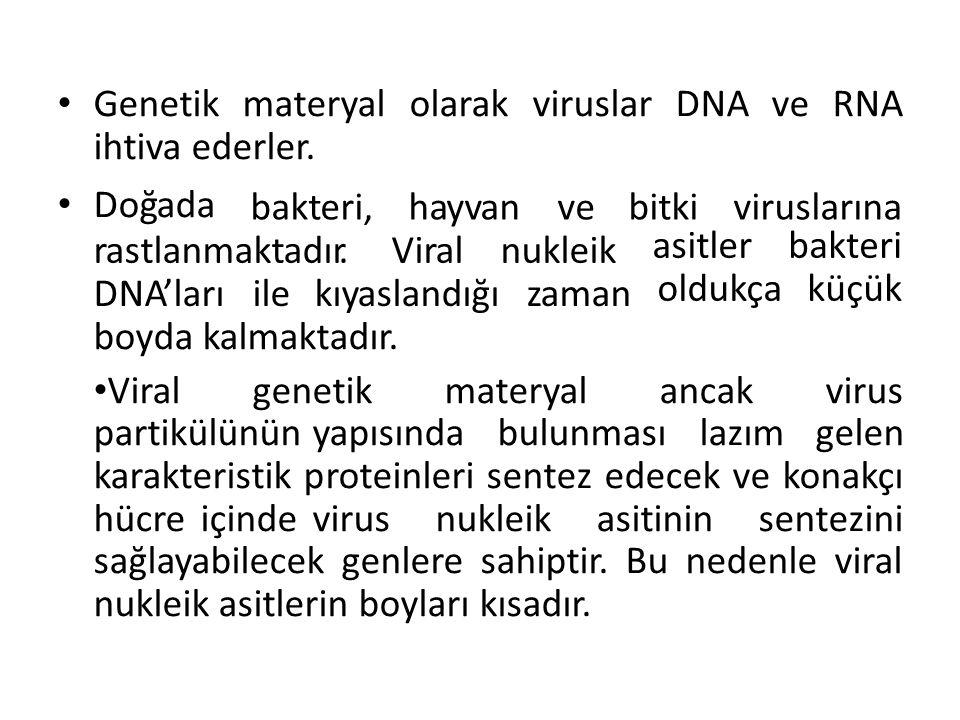 Genetik materyal olarak viruslar DNA ve RNA ihtiva ederler.