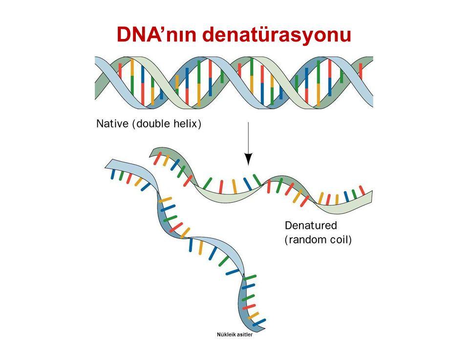 DNA'nın denatürasyonu