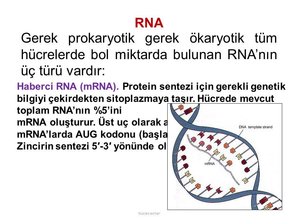 RNA Gerek prokaryotik gerek ökaryotik tüm hücrelerde bol miktarda bulunan RNA'nın üç türü vardır: