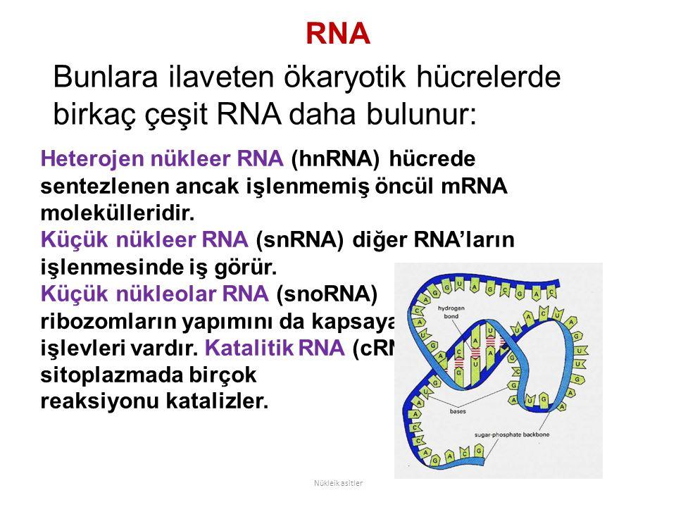 Bunlara ilaveten ökaryotik hücrelerde birkaç çeşit RNA daha bulunur: