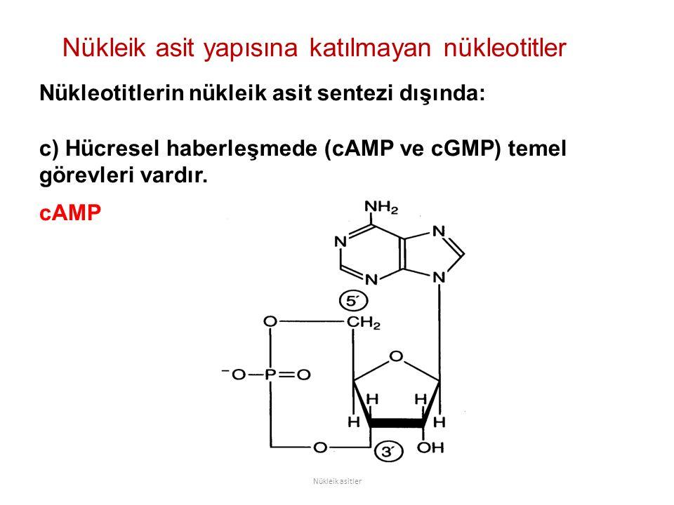 Nükleik asit yapısına katılmayan nükleotitler