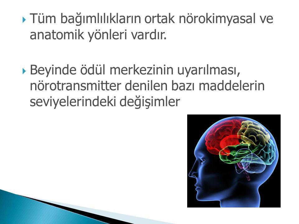 Tüm bağımlılıkların ortak nörokimyasal ve anatomik yönleri vardır.