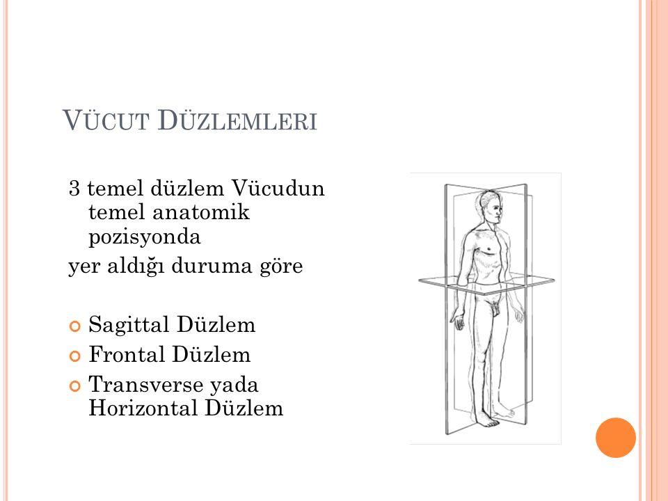 Vücut Düzlemleri 3 temel düzlem Vücudun temel anatomik pozisyonda