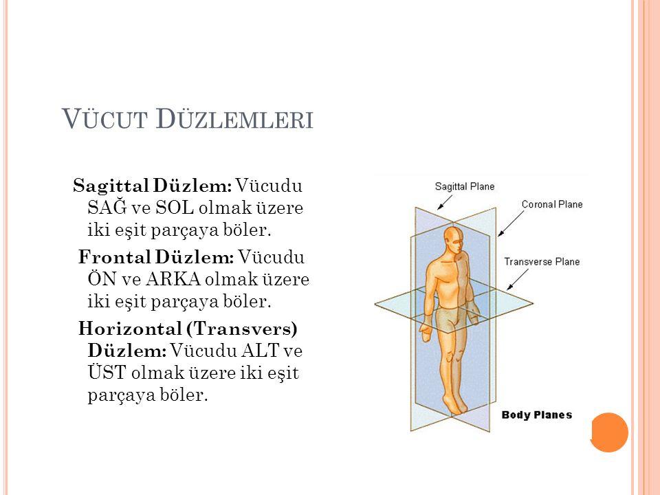 Vücut Düzlemleri Sagittal Düzlem: Vücudu SAĞ ve SOL olmak üzere iki eşit parçaya böler.