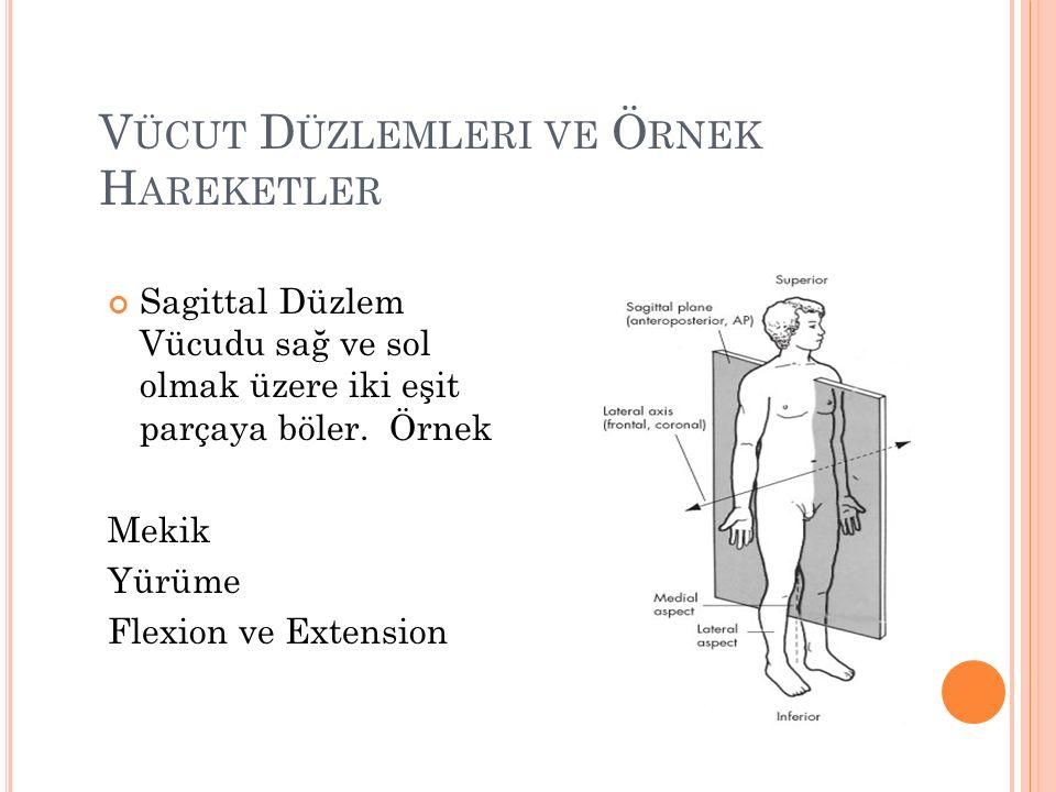 Vücut Düzlemleri ve Örnek Hareketler