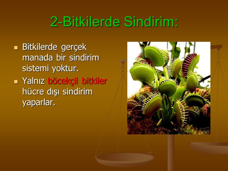 2-Bitkilerde Sindirim: