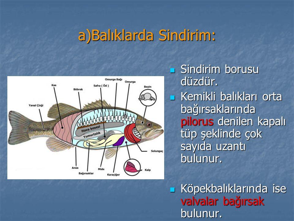 a)Balıklarda Sindirim: