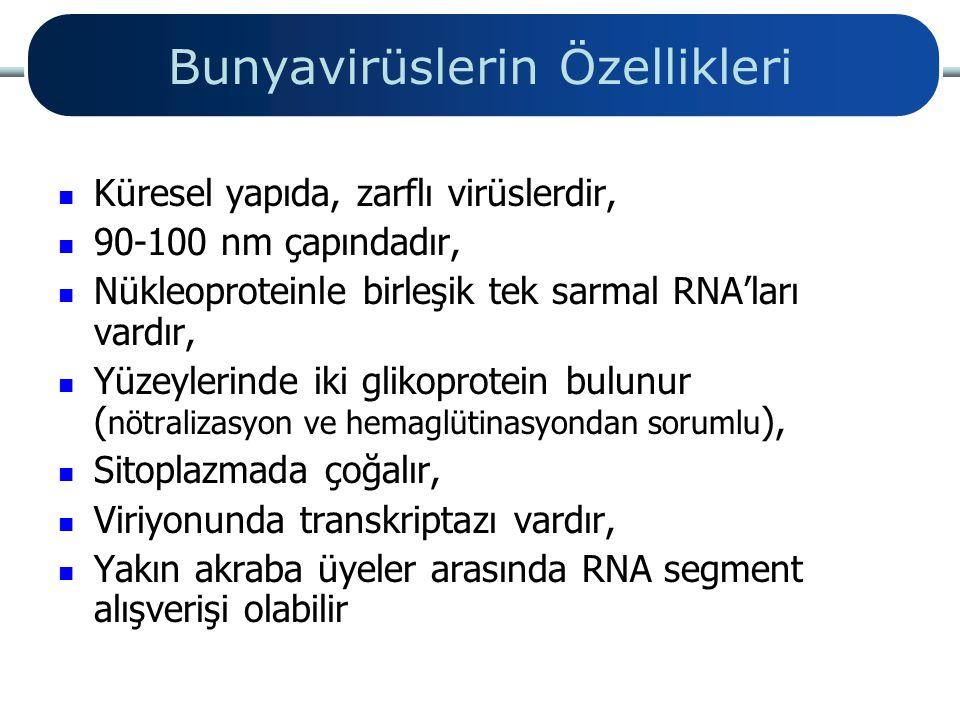 Bunyavirüslerin Özellikleri