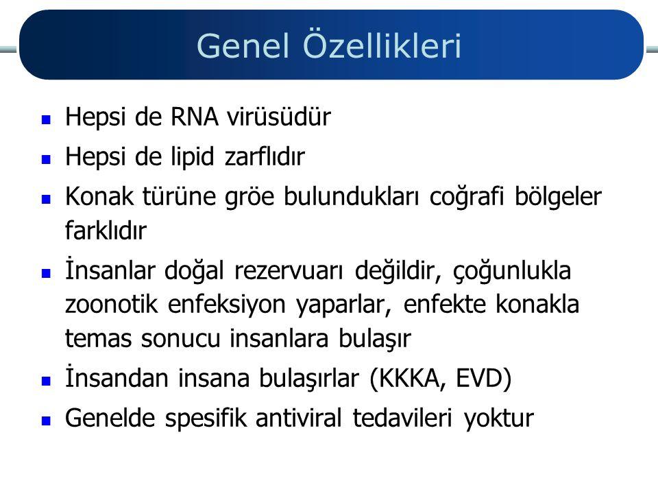 Genel Özellikleri Hepsi de RNA virüsüdür Hepsi de lipid zarflıdır
