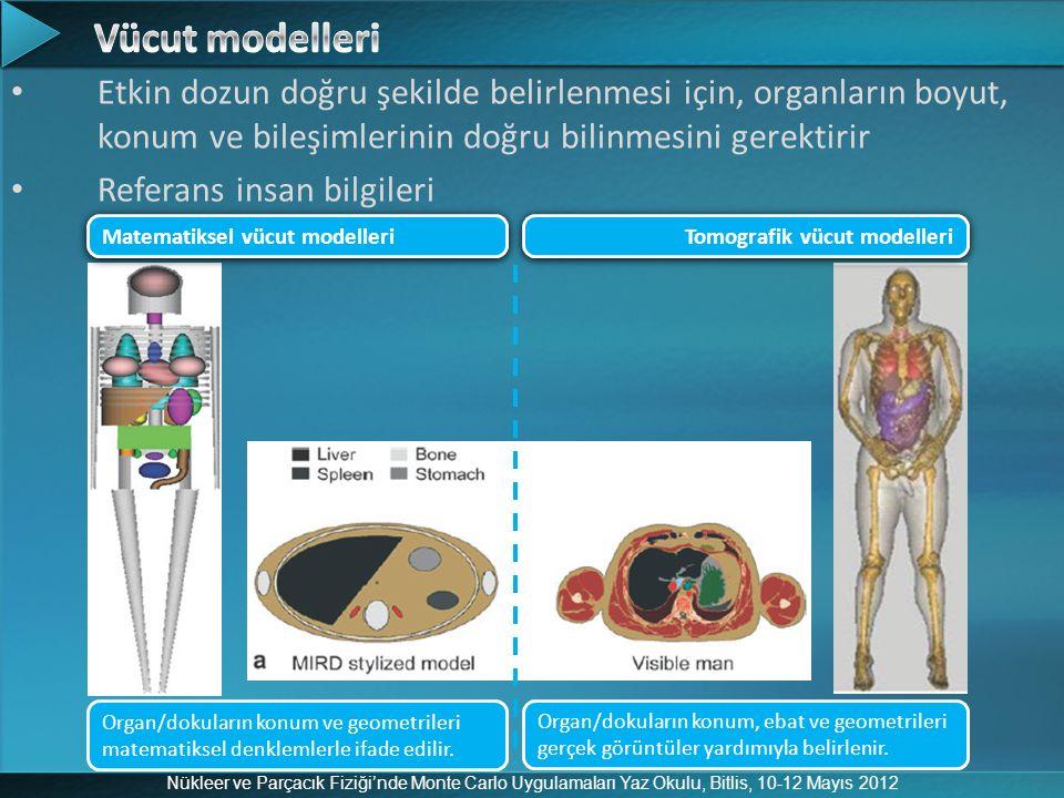 Vücut modelleri Etkin dozun doğru şekilde belirlenmesi için, organların boyut, konum ve bileşimlerinin doğru bilinmesini gerektirir.
