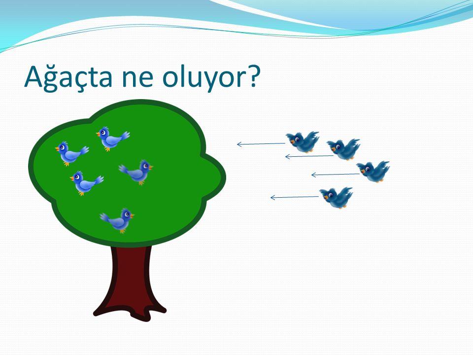 Ağaçta ne oluyor