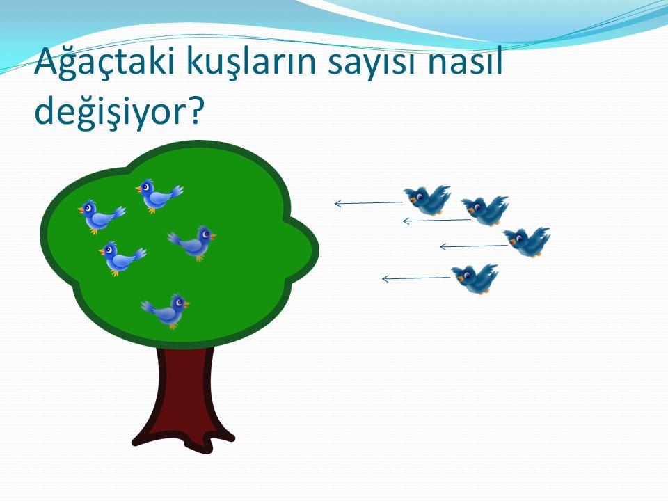 Ağaçtaki kuşların sayısı nasıl değişiyor