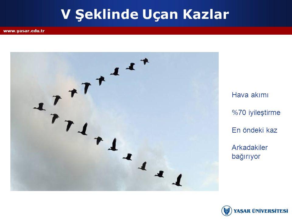 V Şeklinde Uçan Kazlar Hava akımı %70 iyileştirme En öndeki kaz