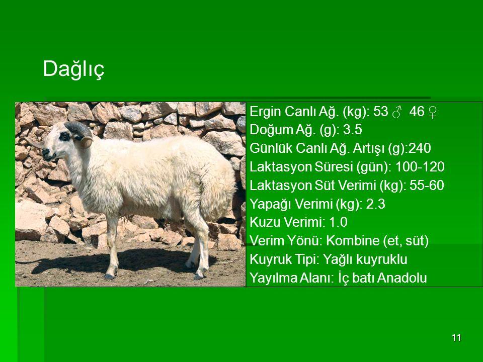 Dağlıç Ergin Canlı Ağ. (kg): 53 ♂ 46 ♀ Doğum Ağ. (g): 3.5