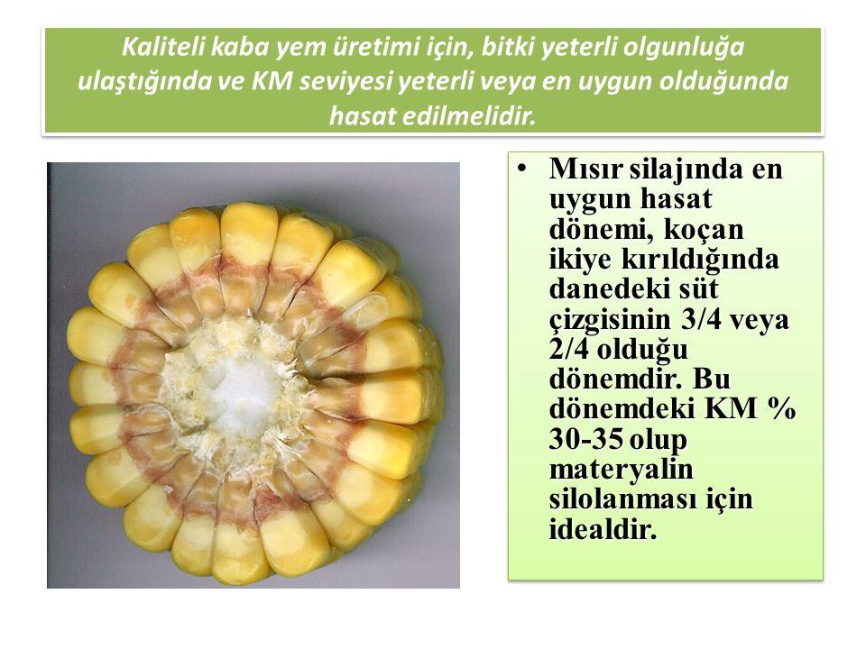 Kaliteli kaba yem üretimi için, bitki yeterli olgunluğa ulaştığında ve KM seviyesi yeterli veya en uygun olduğunda hasat edilmelidir.