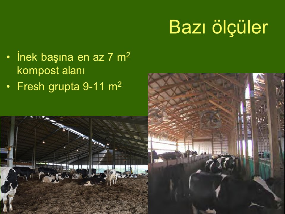 Bazı ölçüler İnek başına en az 7 m2 kompost alanı Fresh grupta 9-11 m2