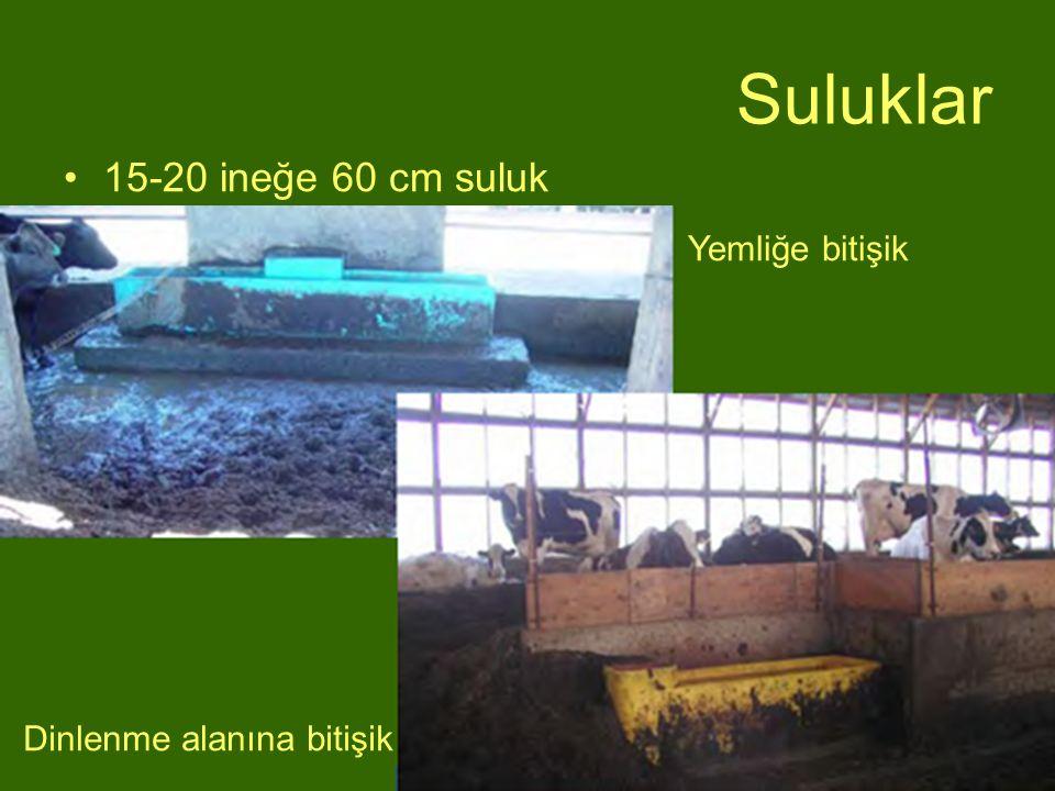 Suluklar 15-20 ineğe 60 cm suluk Yemliğe bitişik